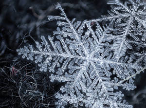 Snowflakes - Fingerprints of Stars