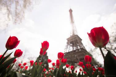 La Vie En Rose by borda