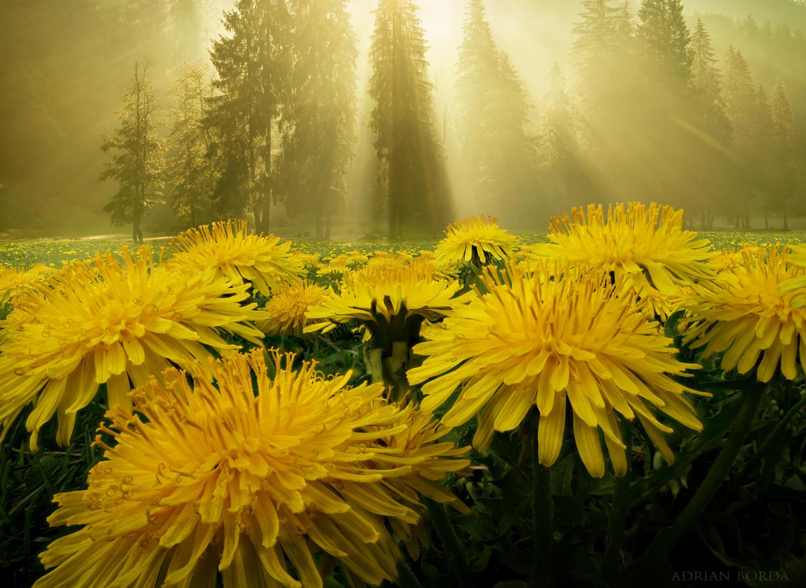 In nature I believe II