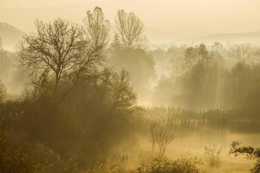 Soft Morning Veil
