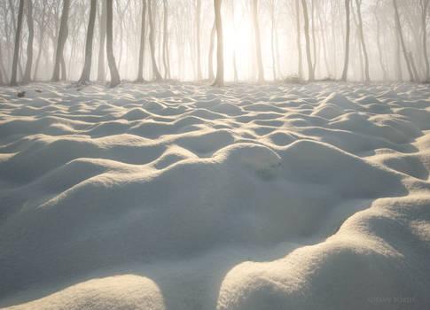 Vanilla Forest