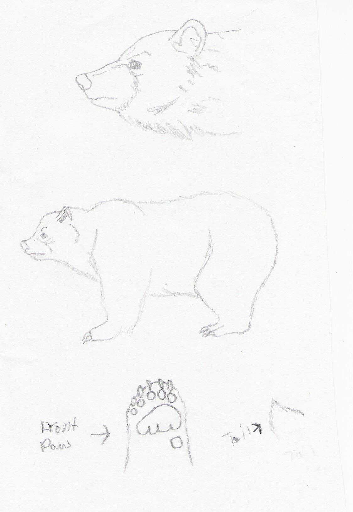 Bear Anatomy by Isytia on DeviantArt