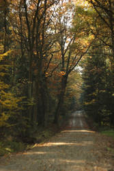 Forest road by AfricAShoX