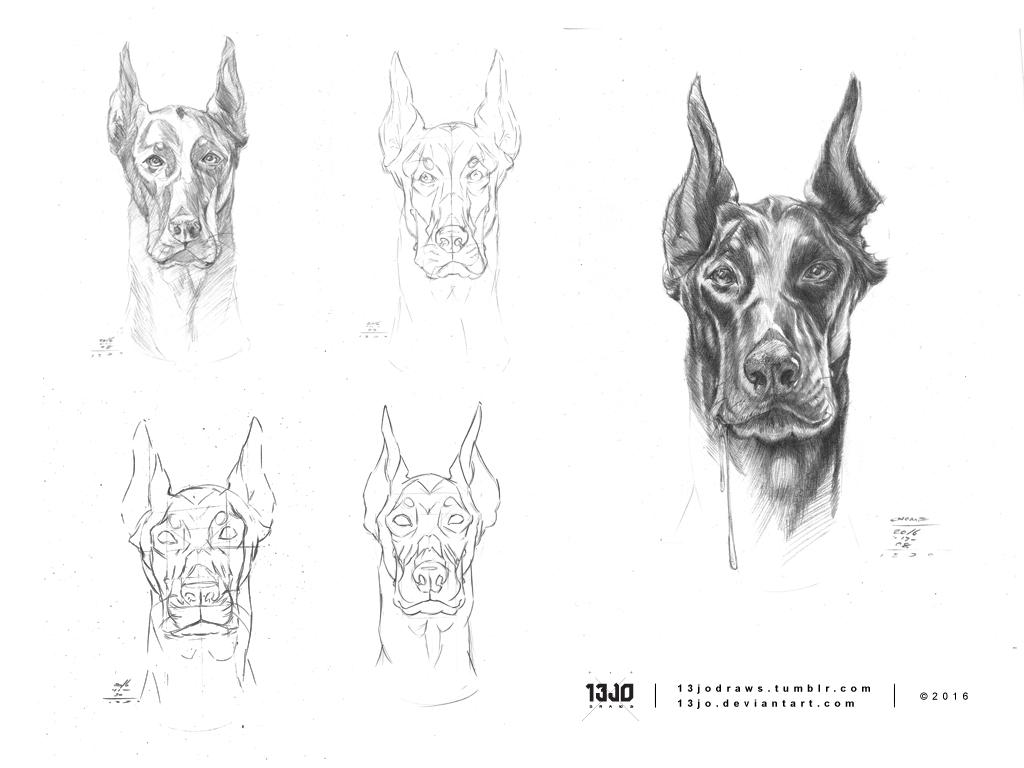 Doberman Study by 13Jo