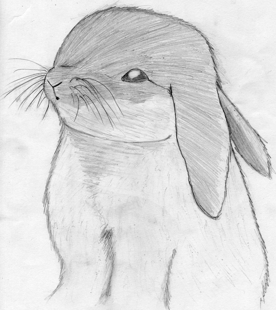 drawing rabbit by skyofangels on deviantart