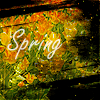 Spring by AnimaAntica