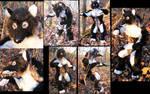 Black Anthro Wolf Plush Toy