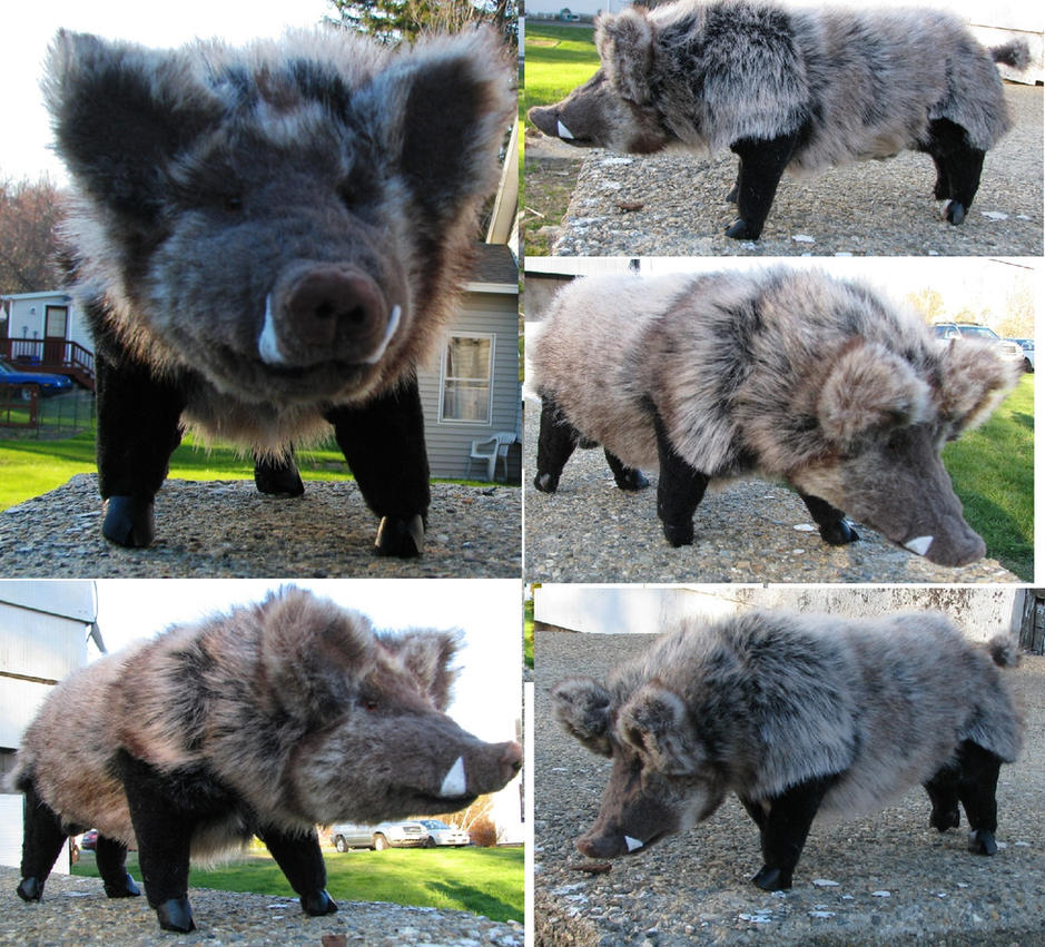 Mature Wild Boar Plush Toy by Jarahamee on DeviantArt