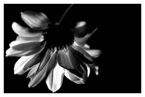 Dark flower by Sweet-Poison
