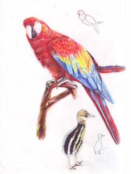 bird part1