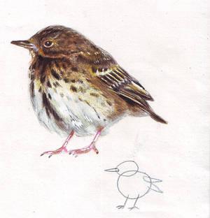 bird part2