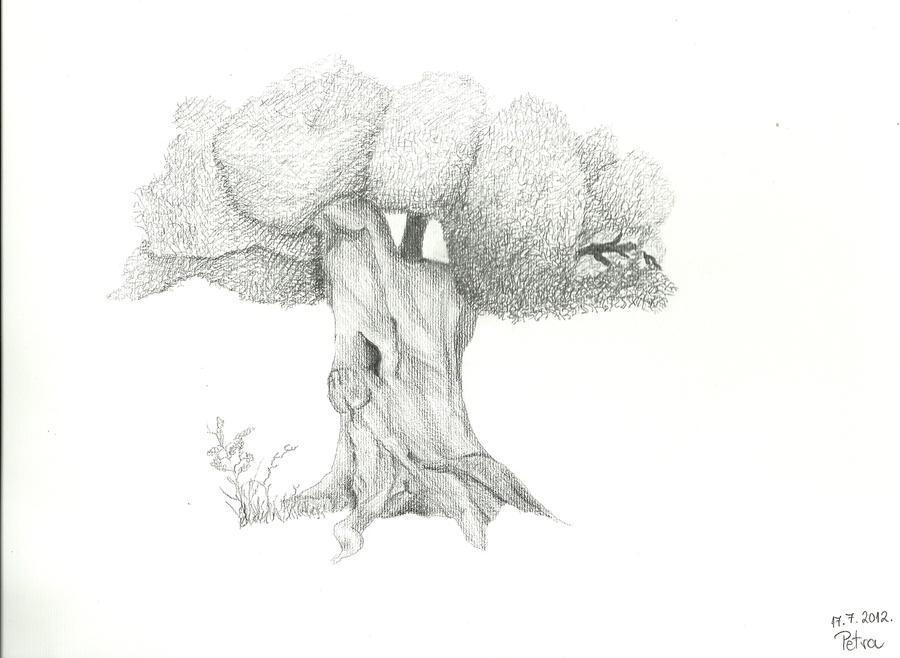 Maslina (The Olive Tree) by PetSto