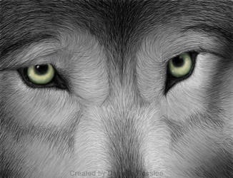 Wolf by ButterflyShards