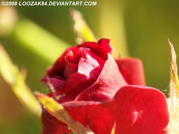 Rose-Colored Glasses: A Confession.