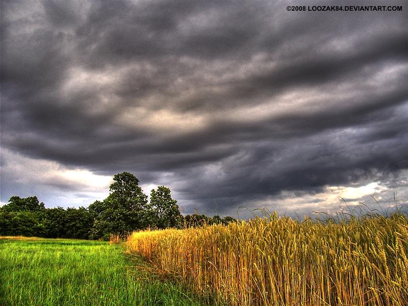 Cloudy sky+field HDR by loozak84
