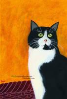 Clueless Kitty by SlytherclawPadawan