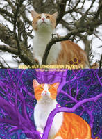 Mega Cat Commission Project sample-MK-3 by SlytherclawPadawan