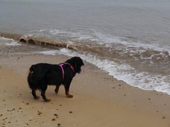 Juno and the Sea!