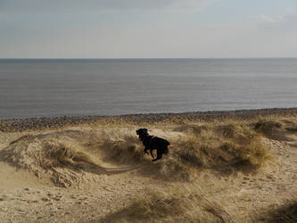 Juno on the dunes!