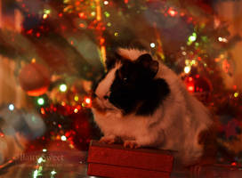 Christmas Guinea Pig by BattySweet