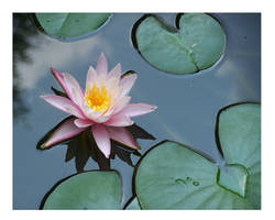 Lilly Pad Pond by Doubtful-Della