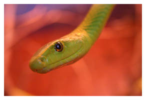 Green Mamba by Doubtful-Della