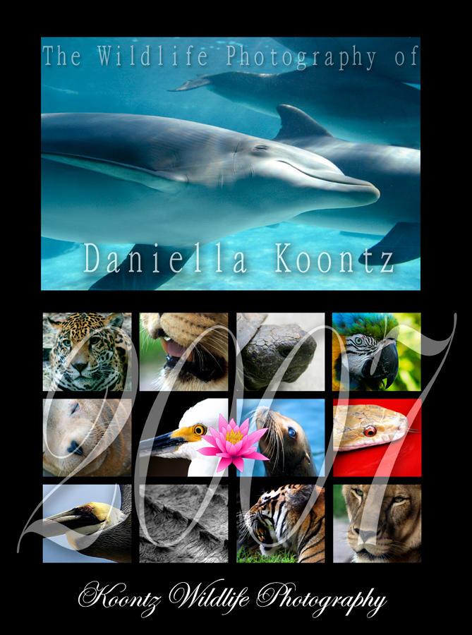 Wildlife Photography Calendar by Doubtful-Della