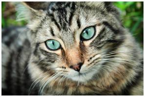 I Support Caturday by Doubtful-Della