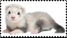 ferret stamp by cranberryz