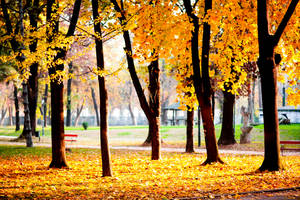 This is not just another autumn photo by hypertech