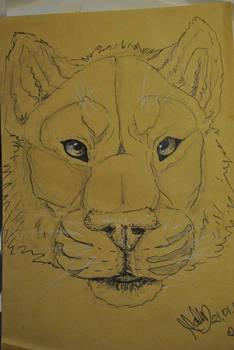 Speed Draw - Tiger