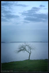 Lonely Tree by rissdemeanour