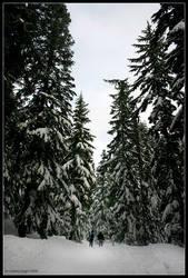 Tall Trees by rissdemeanour