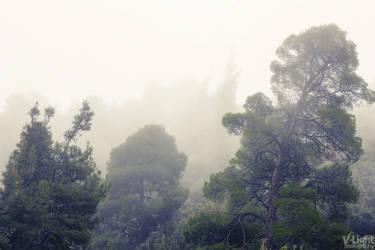 Foggy day by V-Light