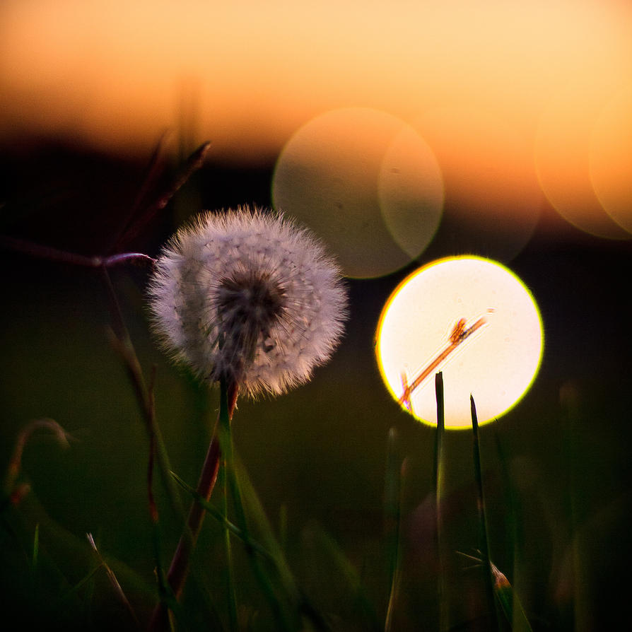 i see the light by Mashtee