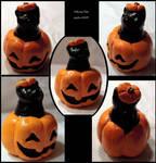 Cat inna Pumpkin by jenkiwi