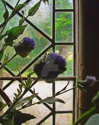 Plants Stock - Thistle