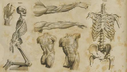 1700's Anatomy Wallpaper by JasonMonteCarlo