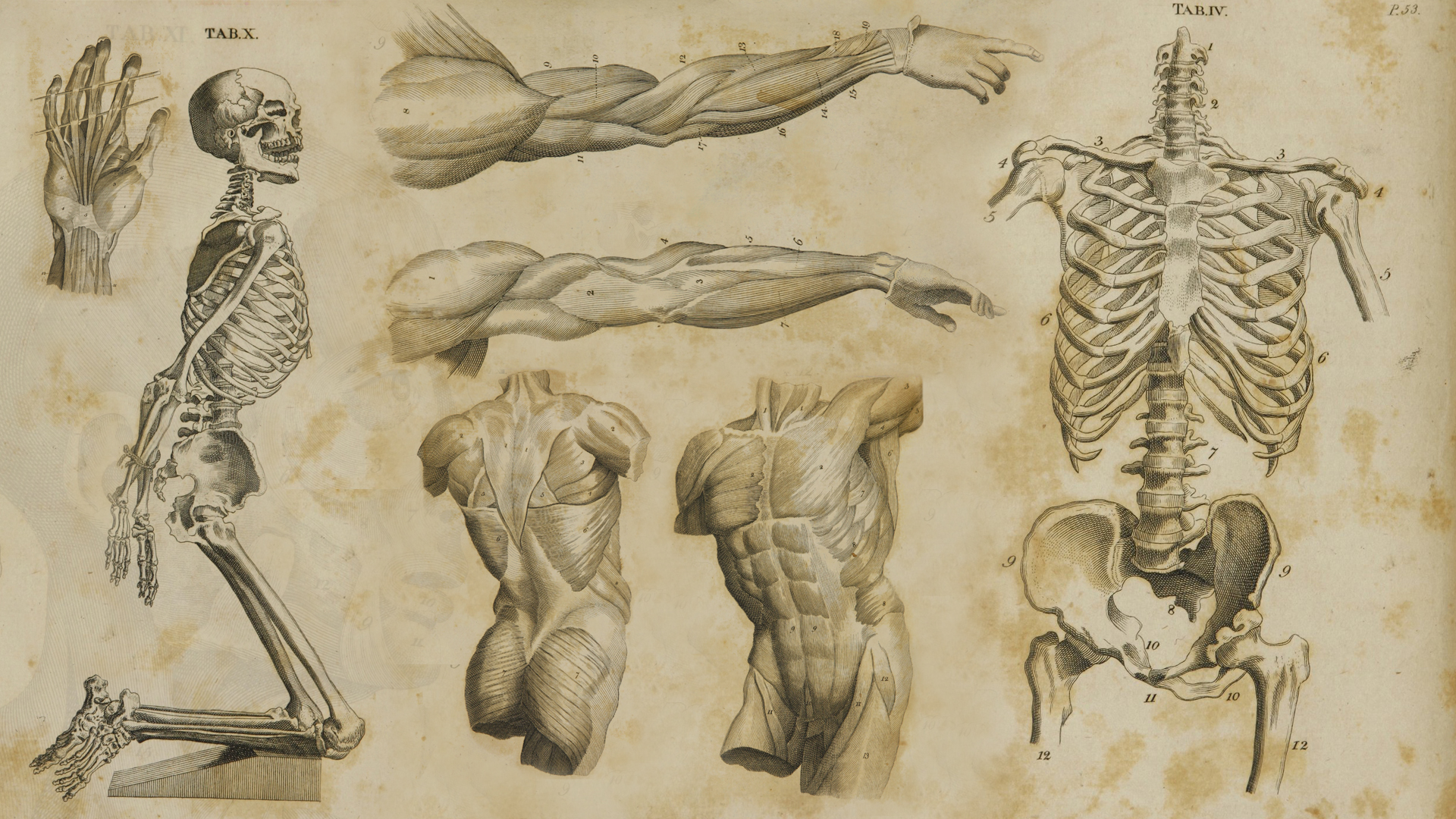 1700\'s Anatomy Wallpaper by JasonMonteCarlo on DeviantArt