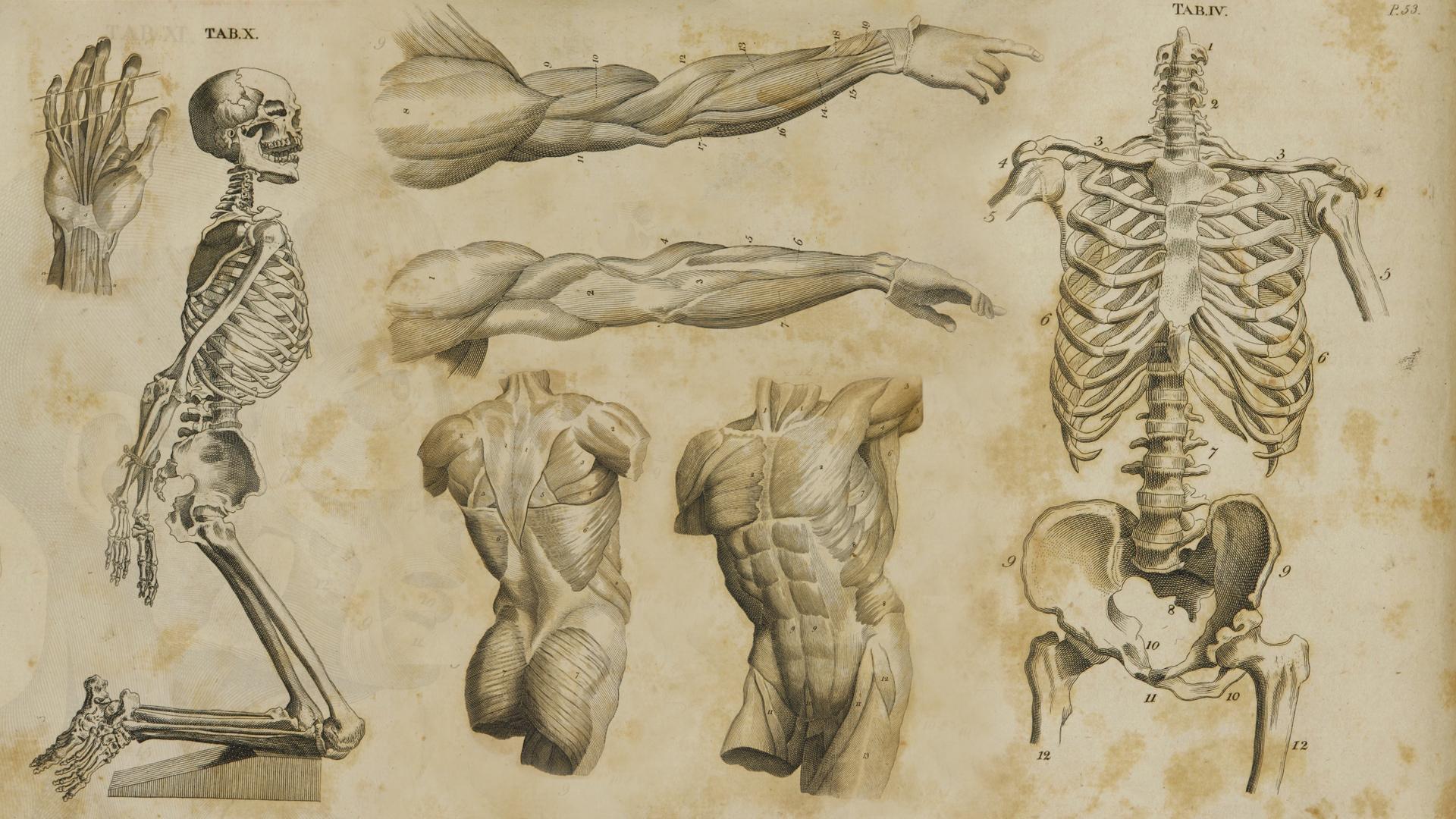 1700 39 s anatomy wallpaper by jasonmontecarlo on deviantart