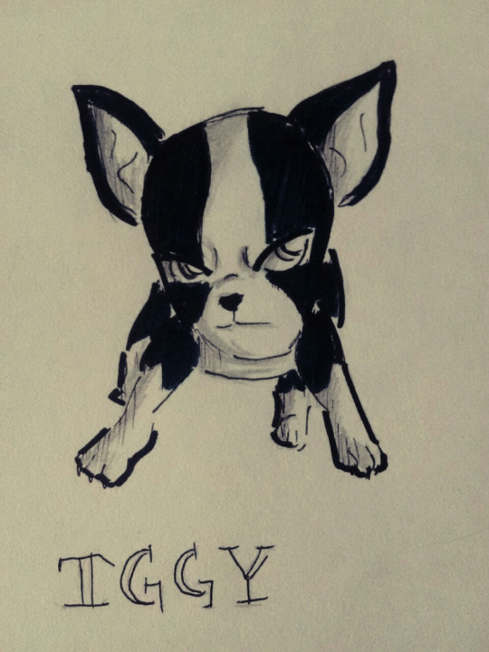 Iggy  sketch by Alleby