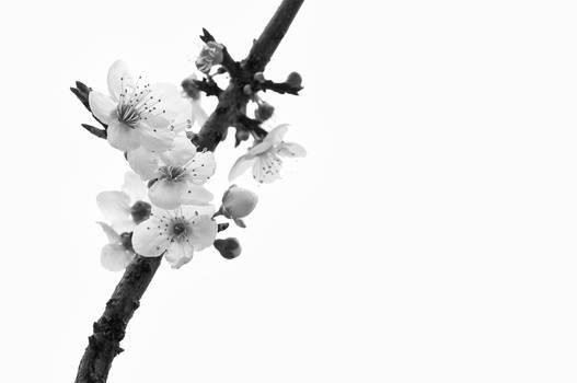 Spring in B + W