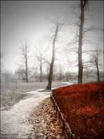 Where is my love by WojciechDziadosz