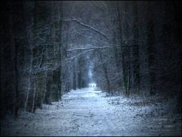 Shrubbery of unfulfilled dream by WojciechDziadosz
