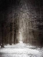 Hanging Trees by WojciechDziadosz