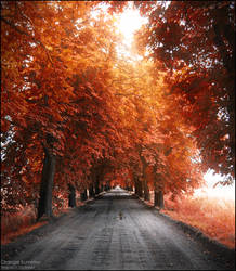 Orange Summer by WojciechDziadosz