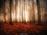 Foggy Wild Forest