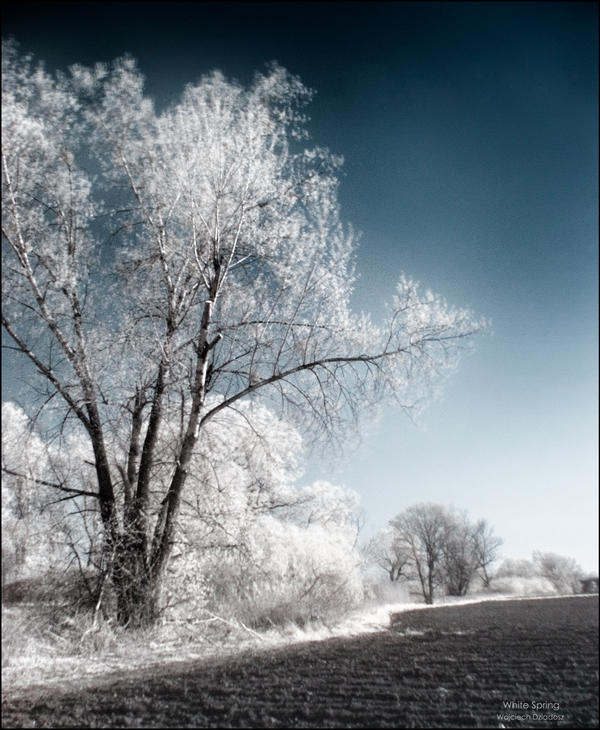 White spring by WojciechDziadosz