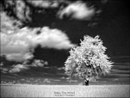 Bless the wind by WojciechDziadosz
