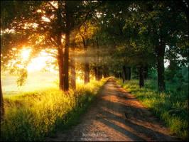 Beautiful Day by WojciechDziadosz